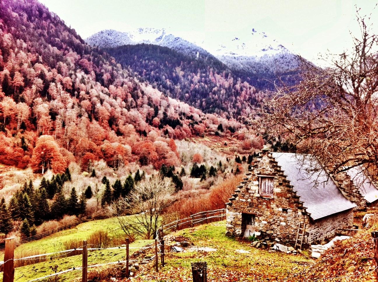 Autumn Colours, Snow Capped Peaks