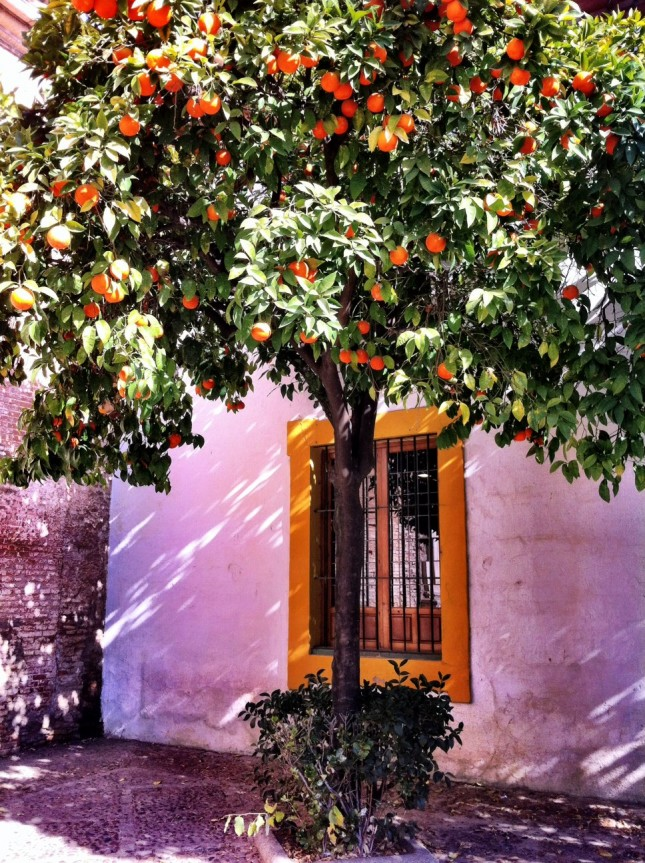 The classic Seville Orange casting shade on the corner of a square in Seville