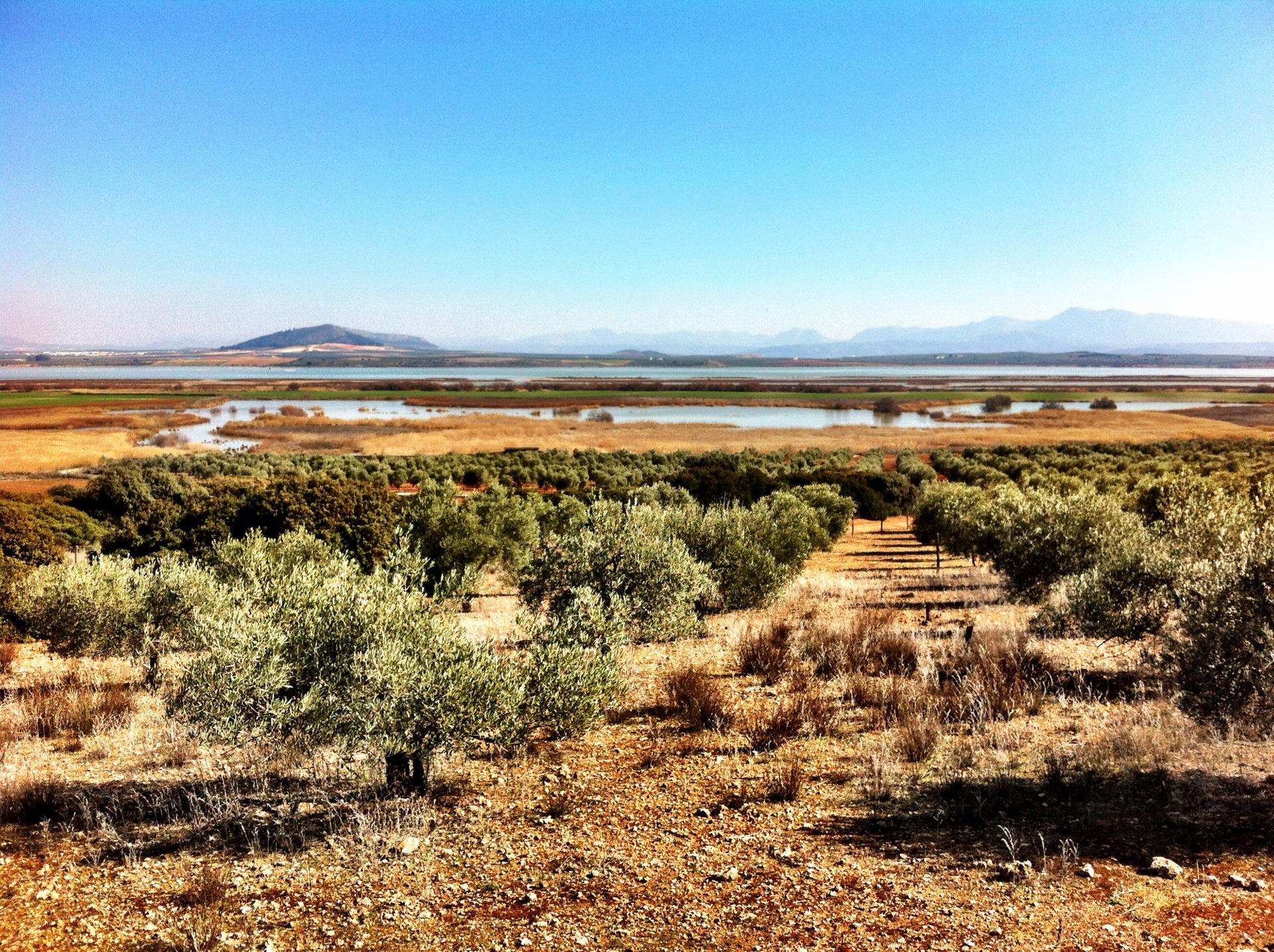 Twitching at Las Lagunas de Campillos, Andalusia