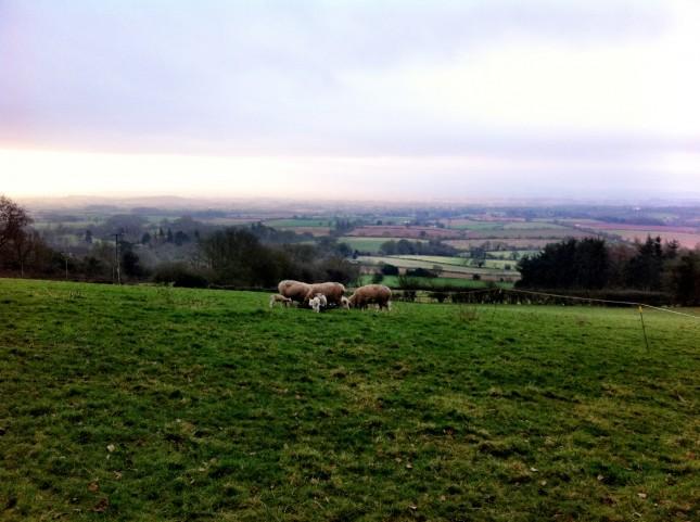 Spring Lambs above West Bagborough