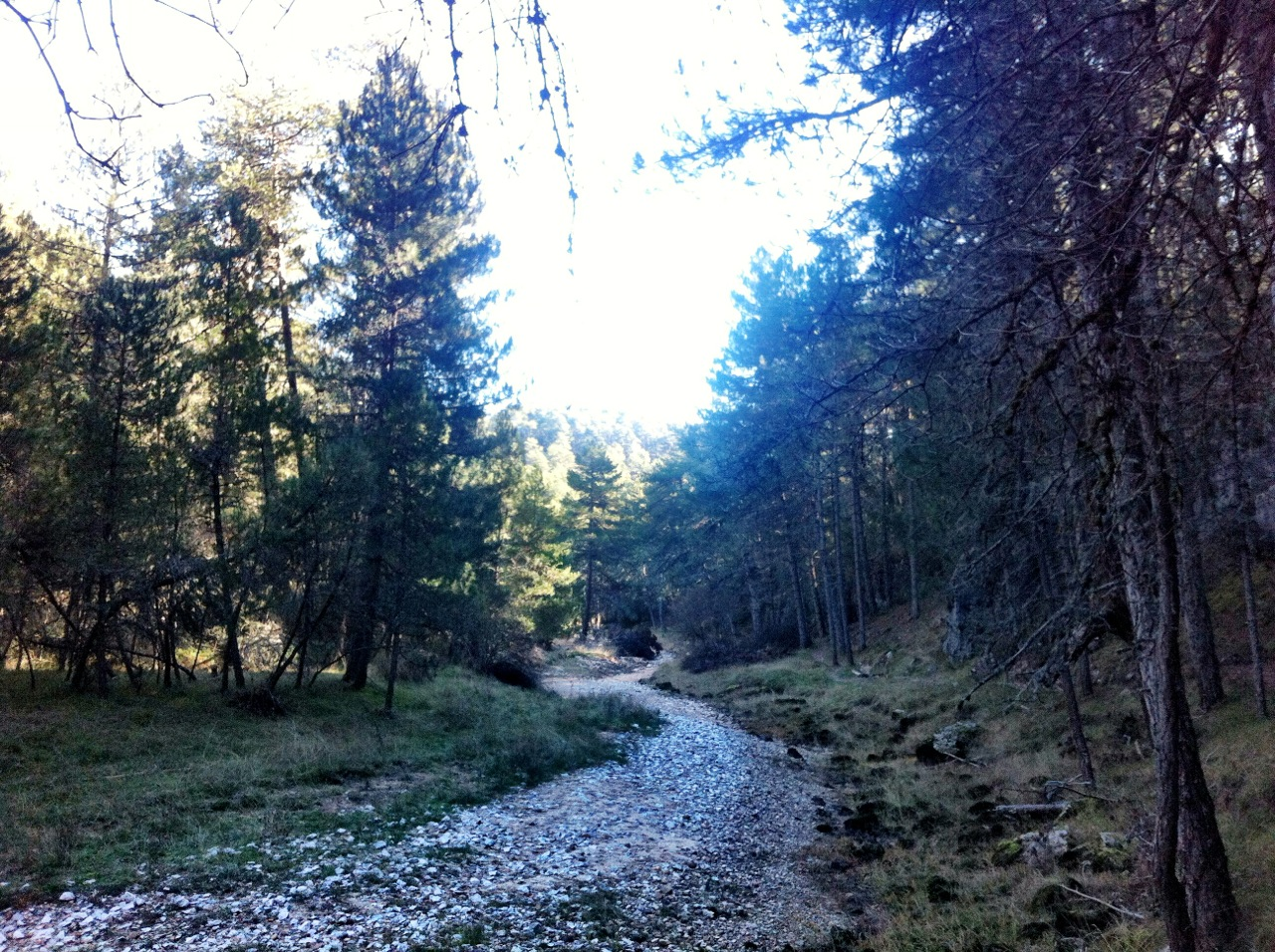 A Walk in the Cañon del Rio Lobos