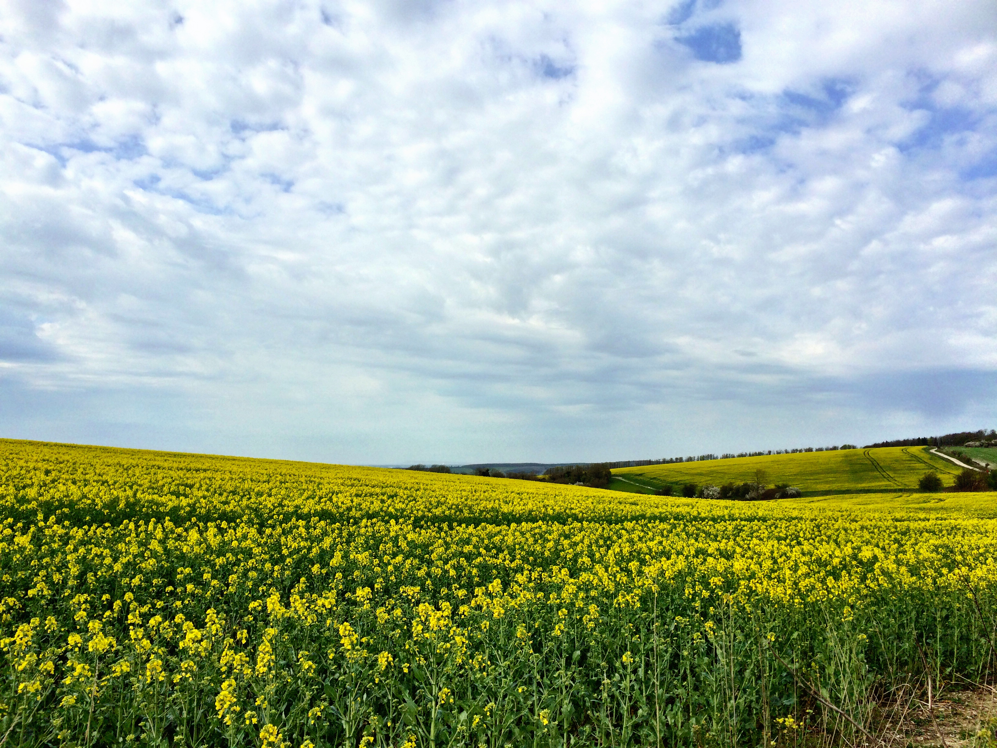The South Downs Way – Amberley to Lancing